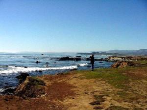 plage, côte, océan, paysage