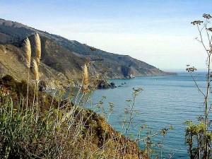 plage, côte, océan, l'eau, la mer, l'aneth