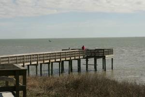 birdwatching, coastal, enviroments, sea