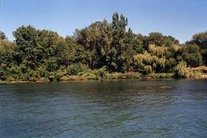 buzağı, ada, sahil şeridi, detroit, nehir, uluslararası, yabani hayvanlar ve bitkiler, refug