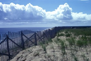 Cape national seashore, wellfleet, Massachusetts