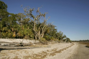 coastal, area, environment