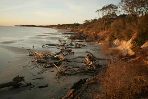 driftwood, shore