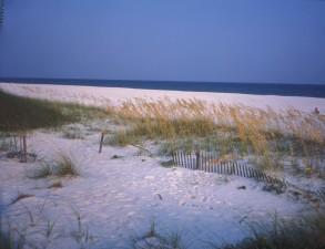 scenic, coastline, santa, rosa, island, dunes, grasses, fence, foreground