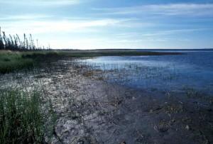 rivage, la végétation, la boue