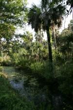 ruisseau, méandres, maritime, forêt