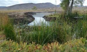 美しい風景、チャネル、水、雑草