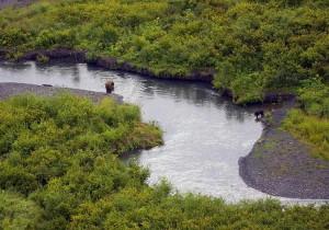 ours brun, ours noir, russe, rivière