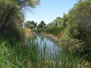 maïs, ruisseau, sources, désert, désert, refuge