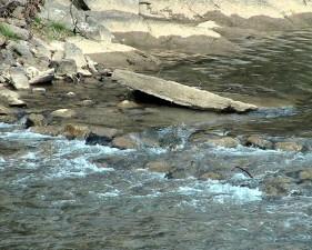 ruisseau, sauvage, nature