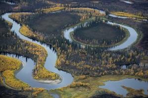 creek, wildlife, scenics