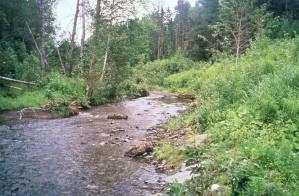 east, branch, greenlaw, brook