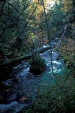 caché, ruisseau, chute, couleurs