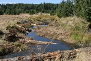 grande, journaux, redd, ruisseau, canal, poisson, l'habitat
