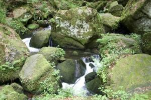 mousse, pierres, ruisseau