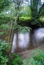 folyó, patak, fák
