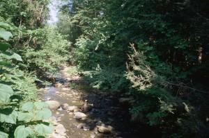 peu profond, rocheux, ruisseau, montagne