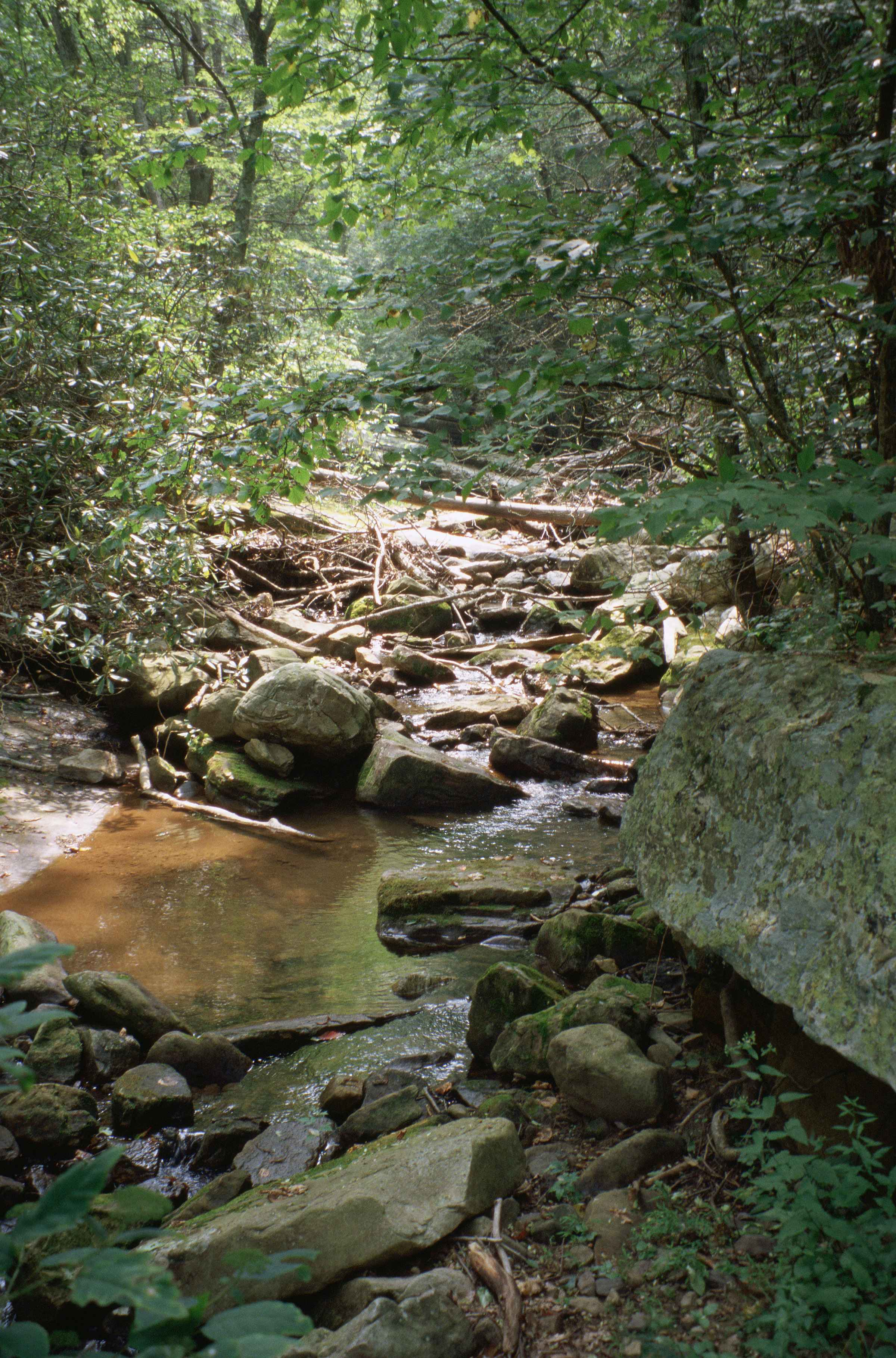33 12 50 20 >> Free picture: shallow, rocky, mountain, stream