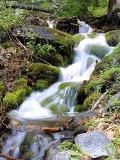 dampft, Bäche, Wasser, Moos, Laub, Wälder