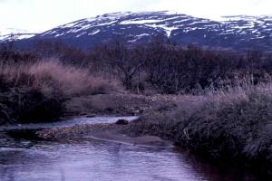 ruisseau, montagne, paysage