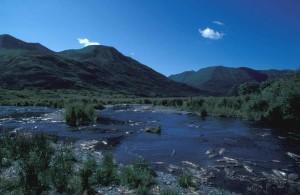 ruisseau, montagnes, été