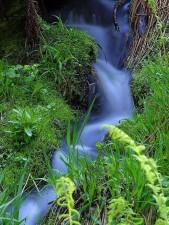 cours d'eau, des ruisseaux, des prairies, des mousses