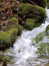 cours d'eau, des ruisseaux, l'eau, la mousse, les feuilles