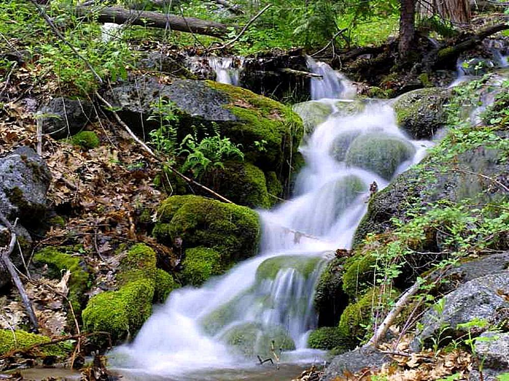 Free Picture Streams Moss Leaves