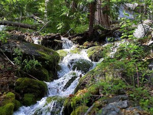 streams, moss, water, forests, rocks
