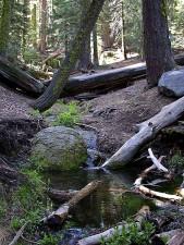streams, rocks, water, moss, forrest, trees