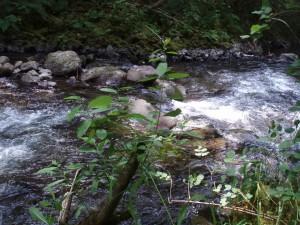 Draga, potok, scenics