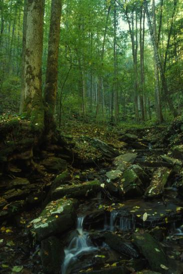 headwaters, Chattahoochee, river, flowing, wooded, area