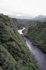 wild, nature, stream