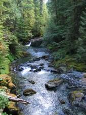 willamette, national, forêt, ruisseau