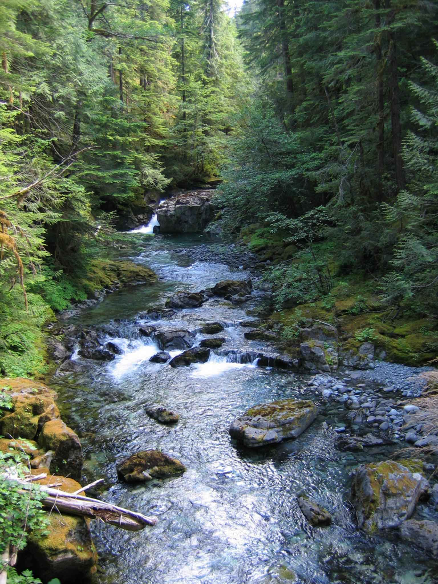 Free picture: willamette, national, forest, creek