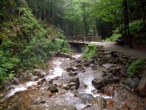 bois, pont, forêt, eau