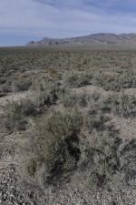 scénique, désert, montagnes, fond, désert