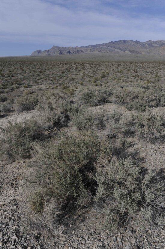 scénické, púšte, hory, pozadia, desert