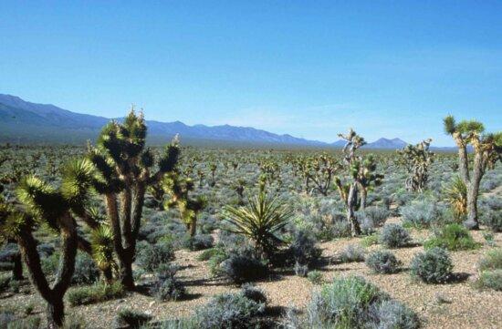 botanika, krajiny, púšť, Les, scenics