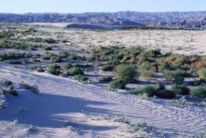coachella, vallée, désert
