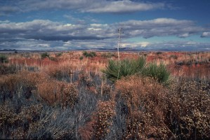desert, beauty, landscape