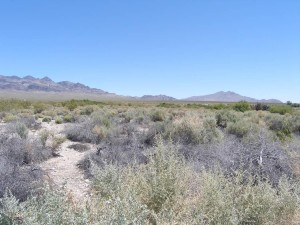 desert, environment