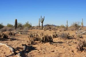 désert, paysage, Cabeza, Prieta, désert, refuge