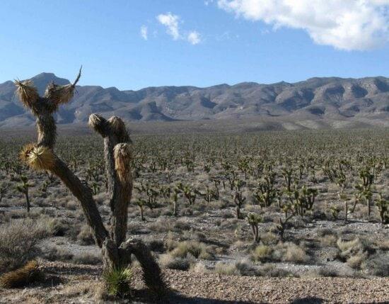 desert, landscape, scenics