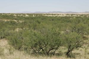 désert, plantes, buenos, aires, DESRET