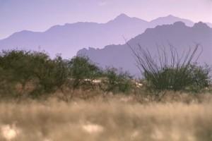 desierto, pintorescos, la tierra