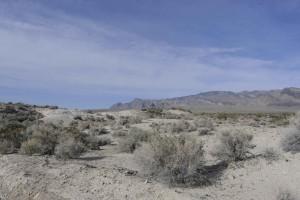 Wüste, Buschwerk, Lebensraum