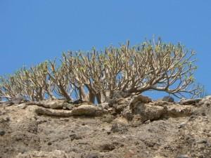 desert, tree