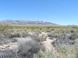 grass, desert, landscape