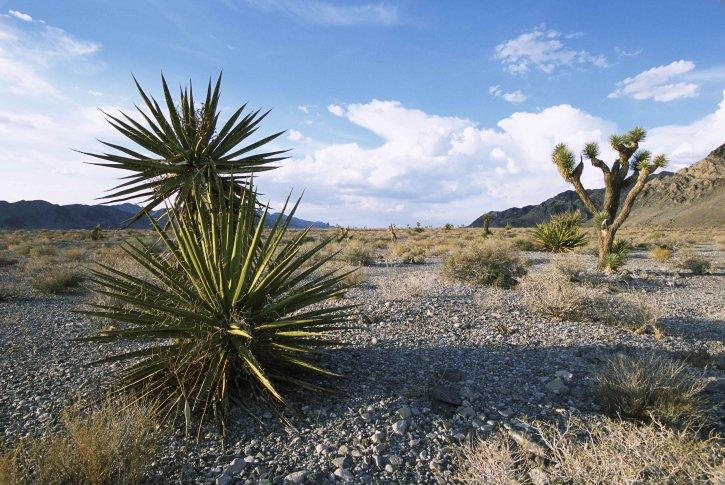 Mexico, desert, nature, landscape